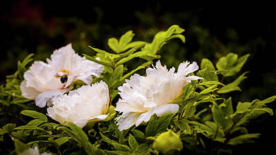 Photograph - A Pollinator's Work Is Never Done by ProPeak Photography