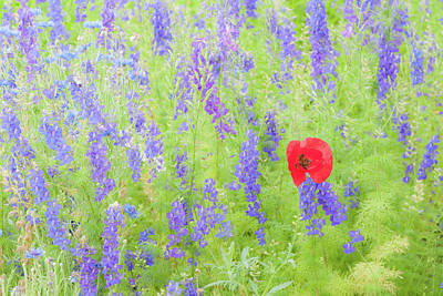 Photograph - A Poppy Among Them by Mark Duehmig