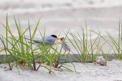 Photograph - A Quick Feeding by Susan Rissi Tregoning
