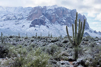 Photograph - A Rare Desert Winter  by Saija Lehtonen