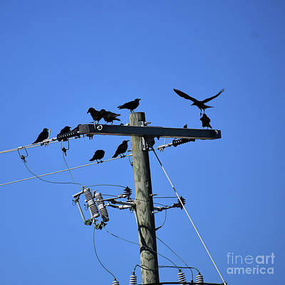 Photograph - A Real Crows Nest  by Skip Willits