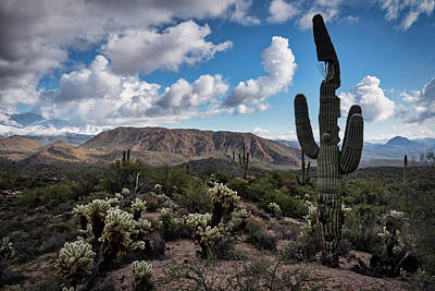 Photograph - A Saguaro With Personality by Saija Lehtonen