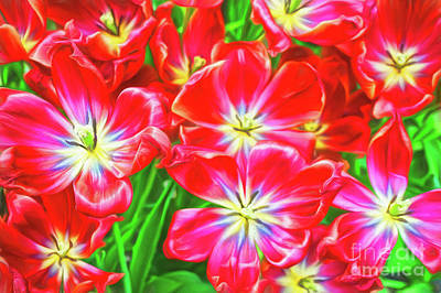 Photograph - A Sea Of Brilliant Red Tulips by Sue Melvin