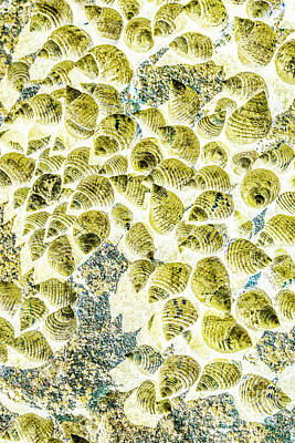 Beach Royalty-Free and Rights-Managed Images - A seashell abstract by Jorgo Photography - Wall Art Gallery