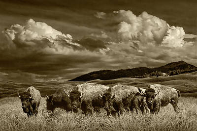 Photograph - A Sepia Tone Photograph Of A Herd Of American Buffalo Bison Grazing In Yellowstone by Randall Nyhof