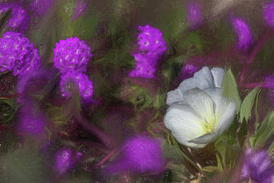 Impressionism Photo Royalty Free Images - A Sketchy Primrose Royalty-Free Image by Peter Tellone