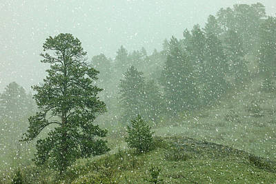 Photograph - A Snow Falls by Todd Klassy