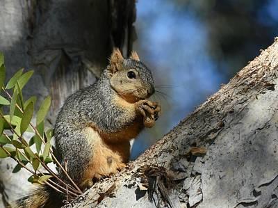 Photograph - A Squirrel's Life 2 by Fraida Gutovich