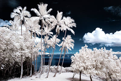 Photograph - A Sunny Infrared Day by Jason Chu