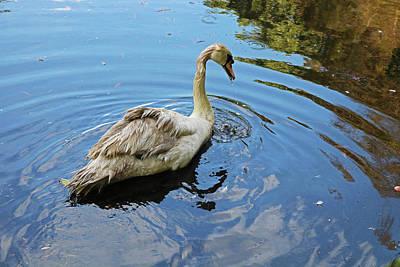 Photograph - A Swan In The Garden by Michiale Schneider