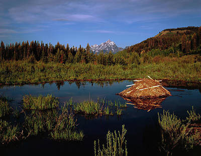 Photograph - A Teton Summer by Paul Breitkreuz