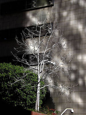 Photograph - A Tree With No Leaves  by Hold Still Photography