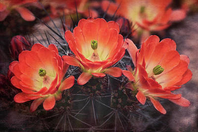 Photograph - A Trio Of Beauty  by Saija Lehtonen