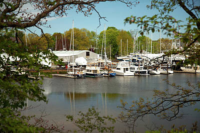 Photograph - A View Of The Marina by Karol Livote