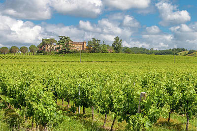 Photograph - A Vineyard In The Tarn France by W Chris Fooshee