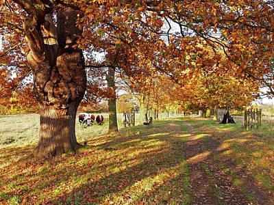 Photograph - A Walk In The Park - Pishiobury by Gill Billington