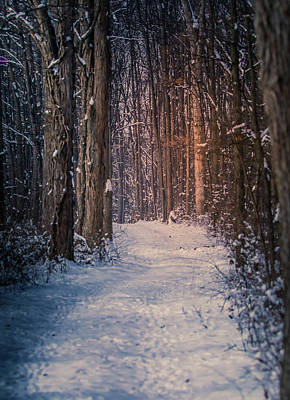 Photograph - A Walk In Winter by Dan Sproul