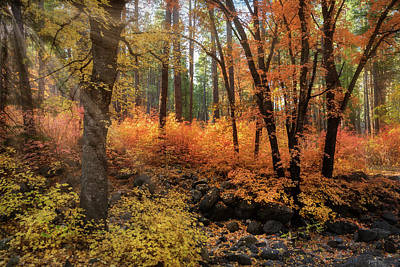 Photograph - A Walk Through The Enchanted Forest  by Saija Lehtonen
