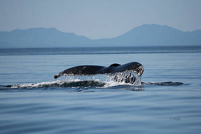 Photograph - A Whale Of A Tail - Wildlife Art by Jordan Blackstone