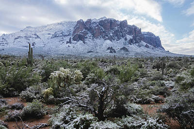Photograph - A White Winter In The Sonoran  by Saija Lehtonen