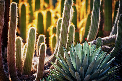 Photograph - A Whole Lotta Cacti  by Saija Lehtonen