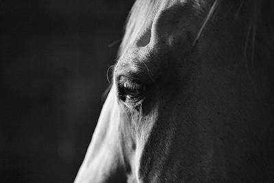 Photograph - A Window to the Soul by SL Ernst