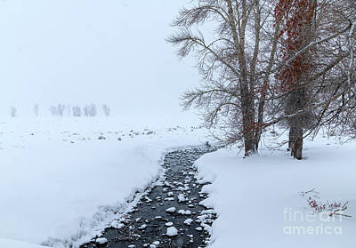 Photograph - A Winter's Day - Yellowstone Np by Sandra Bronstein
