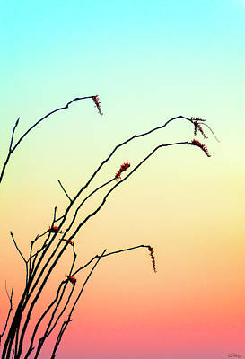 Photograph - A Zen Moment by Dee Browning