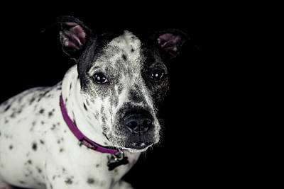 Photograph - Abbey's Serious Face by Jeanette Fellows