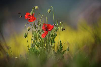 Photograph - About Little Bee by Vlad Sokolovsky