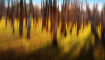 Photograph - Abstract Image Of Grove Of Trees by Bob Cornelis