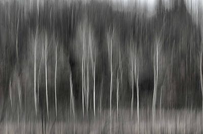 Photograph - Abstract Of Birch At The Edge Of The Marsh 2018-2 by Thomas Young