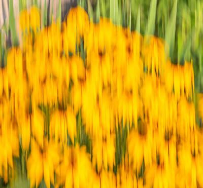 Photograph - Abstract Rudbeckia 2018-1 by Thomas Young