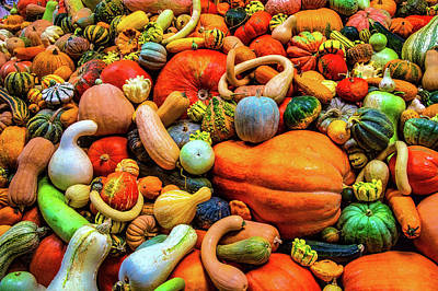 Photograph - Abundance Of Gourds And Pumpkins by Garry Gay