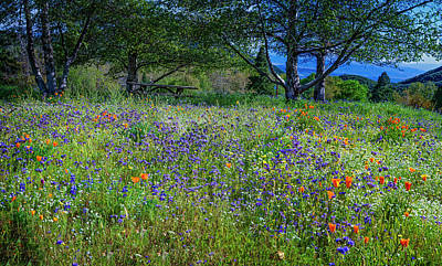 Photograph - Abundant Wildflowers At Oak Glen Preserve by Lynn Bauer