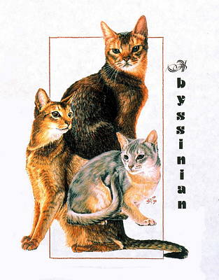 Drawing - Abyssinian Cat by Barbara Keith