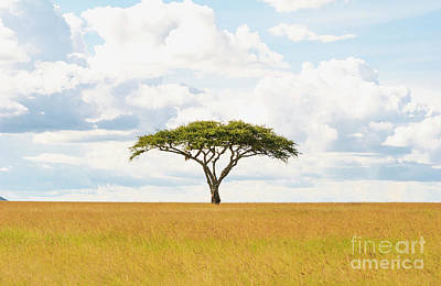 Green Tree Of Life - Serengeti 5100 - Safari Tanzania East Africa  Original