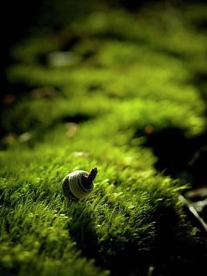 Photograph - Acorn On Green Moss by Masahiro Makino