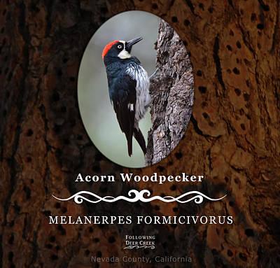 Digital Art - Acorn Woodpecker Granary Tree by Lisa Redfern