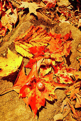 Photograph - Acorns Fall Maple Oak Leaves by Meta Gatschenberger