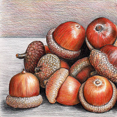 Still Life Drawings - Acorns by Nancy Mueller