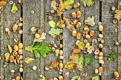 Photograph - Acorns On Wood by Frans Blok