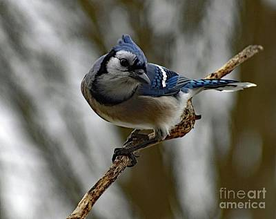 Beastie Boys - Action Pose - Blue Jay by Cindy Treger