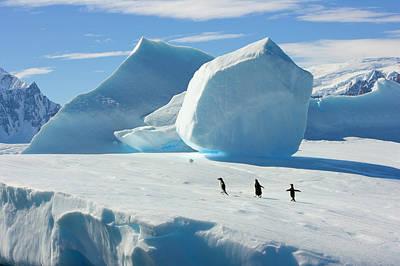 Photograph - Adelie Penguins On Iceberg, Antarctic by Eastcott Momatiuk