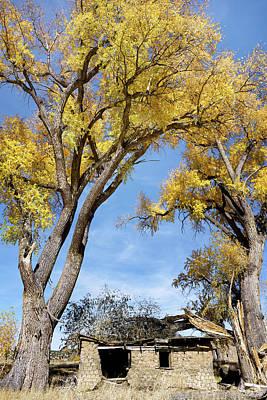 Photograph - Adobe Ruins Beneath Cottonwoods by Kathleen Bishop