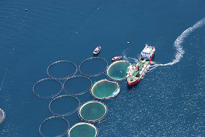 Photograph - Aerial View Of Fish Farm by Gece33