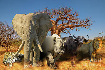 Photograph - African Animals And Baobab Background by Benny Marty