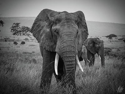 Animals Royalty-Free and Rights-Managed Images - African Bull Elephant by Elie Wolf
