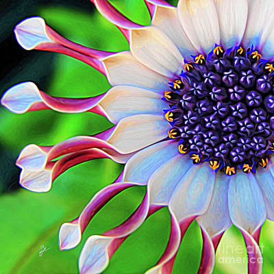 Mixed Media - African Daisy by TK Goforth