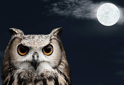 Eagle Photograph - African Eagle Owl by Mediaproduction